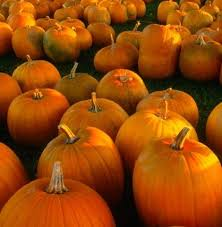 Minges Pumpkin Festival 2014 by 10 Best Taft Theatre Images On Pinterest Ohio Theatres And