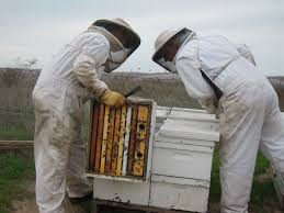 Halloween City Yuba City Hours by What U0027s The Story Behind The Massive Bee Die Off In Fresno County