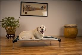 Chew Resistant Dog Bed by 6 Indestructible Dog Beds For Chew Tastic Dogs Rover Com