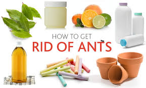 7 Ways to Eliminate Ants Using Household Items Improvements