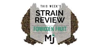 Strain Review Forbidden Fruit