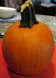 Fresh Pumpkin For Dog Diarrhea by Pumpkin Corkandspoon