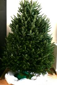 Balsam Christmas Tree Care by How To Care For A Fresh Christmas Tree Home With Cupcakes And