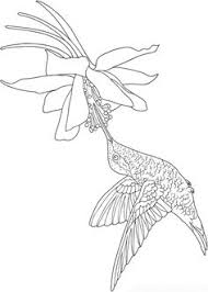 Welcome To Dover Publications Creative Haven Birds Draw And Color