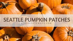 Seattle Pumpkin Patch by Seattle Area Pumpkin Patches 2017 Laurie Way