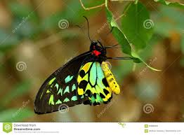100 Butterfly House Melbourne Stock Photo Image Of Colorful Close Macro 83689064