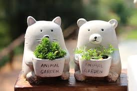pflanzen im kinderzimmer ja klar waschbär magazin