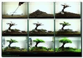 How To Make Aquascape - 28 Images - How To Create A Patio Pond By ... Aquascape Designs For Your Aquarium Room Fniture Ideas Aquascaping Articles Tutorials Videos The Green Machine Blog Of The Month August 2009 Wakrubau Aquascaping World Planted Tank Contest Design Awards Awesome A Moss Experiment Driftwood Sale Mzanita Pieces Two Gardens By Laszlo Kiss Mini Youtube Warsciowestronytop
