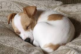 comment empecher chien de monter sur le canapé empecher un chien de monter sur le canap 58 images pourquoi mon