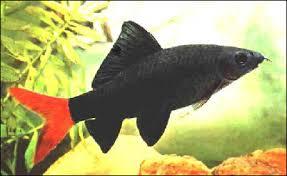 f ne les achetez plus l aquarium de cab65