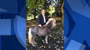 Pumpkin Patch Near Vancouver Wa by Loose Pony Found In Vancouver Parking Lot Owner Sought Kptv