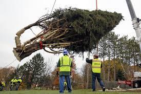 Christmas Tree Rockefeller 2017 by Pennsylvania Tree To Adorn Rockefeller Center For Christmas