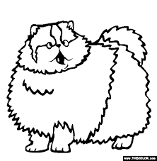 Persian Cat Online Coloring Page