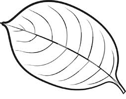 Coloring Pages Of Leaves A Leaf Childrens Fall