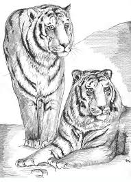 Tigers Coloring Pages For Adults And Teenagers Free High Quality Divided Into Categories