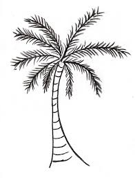 Create A Palm Tree Drawing Step By