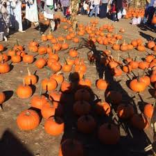 Pumpkin Picking Nj by Depiero U0027s Farm Stand U0026 Greenhouses 71 Photos U0026 51 Reviews