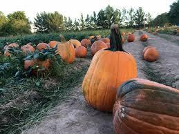 Schnepf Farms Halloween 2017 by Schnepf Farms Pumpkin U0026 Chili Party Queen Creek Az