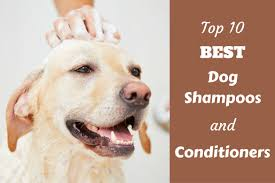 Great Pyrenees Excessive Shedding by Top 10 Rated Best Dog Shampoo And Conditioners