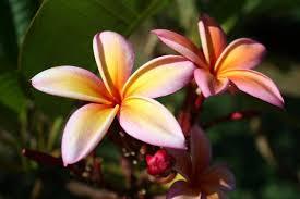 National Tropical Botanical Garden McBryde Garden Kauai