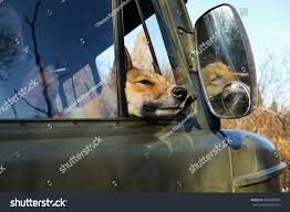 Dog Siberian Husky Window Truck Stock Photo (Royalty Free) 604696094 ... Gmbuickchevroletford Trucksuvmud Grabbers 275 Inch Wide Black Siberian Husky License Plate For Car Truck Motorcycle Or Etsy Husky 618 In X 205 157 Alinum Compact Low Profile White A Stock Photo 24666209 Alamy Whbeater 2nd Row Floor Liner 072015 Jeep Collection Of At Homedepot Rhdecpotcom Truck Neighborhood The Green Greek Representative Group Lets 13 Guy Warrior Sand Tompouce6 Flickr Wheel Well Liners 2016 F150 Youtube Regarding For Mercedes Bevertail Recovery 1 Owner Lk900 817 814 813 Henley 8 Forklift Fork Lift Only 6000 Operating Hours