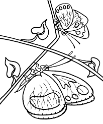 Butterflies Printable Coloring Pages