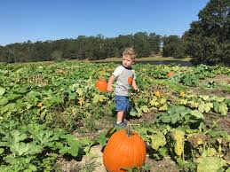 Pumpkin Patch Santa Rosa by Santa Rosa Ranch Llc In Jay Fl 10 3 2017 U2013 Paul And Cate