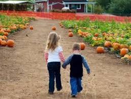 Pumpkin Patch Irvine University by Best Seasonal Farm Activities Near Oc Cbs Los Angeles
