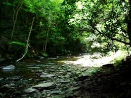 Sinks Of Gandy Camping by Gandy Creek In The Spruce Knob Area Of West Virginia Youtube