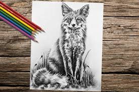 Fox Animal Coloring Book Page Adult