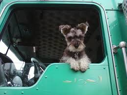 5 Tips For Trucking With Pets - AllTruckJobs.com Truth About Trucking Llc Home Facebook Rain Dogs The Best Dog Breeds For Truck Drivers 2018 Conferences And Trade Shows Road Americas Rest Stops Ez Invoice Factoring Radio Nemo Of Dave Show Tim Ridley Images Lone Star Transportation Reactor Load Pet Friendly Driving Jobs Roehljobs Kevin Rutherford Image Kusaboshicom Haley Mcwhirt Ltl Carrier Relations Manager Jb Hunt Transport
