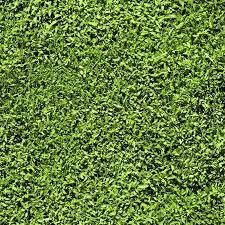 Grass Seamless Pattern Texture Tiles Short Length Of Stock Photo