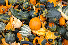 Coconut Grove Pumpkin Patch by Out U0026 About Things To Do In October 2017 Amli Blog Loving
