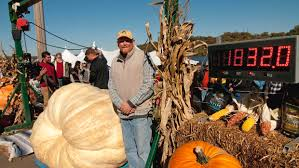 Atlantic Giant Pumpkin Growing Tips by Giant Pumpkins Local Growers Place Second And Third At Annual