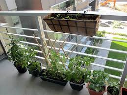 DIY How To Plant A Personal Garden In Small Urban Space