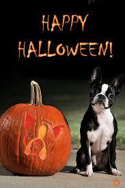 Boston Terrier Pumpkin Pattern by Happy Halloween From Bessie Happy Halloween Halloween Pictures
