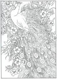 Peacock Feather Coloring Pages Adult Detailed Advanced Printable Line Art Black And White