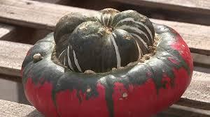 Pumpkin Patch Near Green Bay Wi by 26 Varieties Of Pumpkins Meadowbrook Pumpkin Farm Is U201chome To One