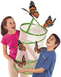 Amazon Insect Lore Butterfly Pavilion Habitat
