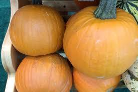 Varieties Of Pie Pumpkins by Organic Pie Pumpkins Produce Geek