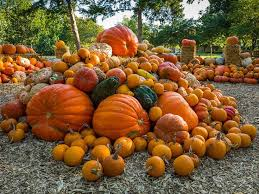 Pumpkin Patch Colorado Springs 2015 by 114 Best Dallas Arboretum Images On Pinterest Dallas Arboretum