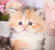 cats for best 25 cats for ideas on baby cats for
