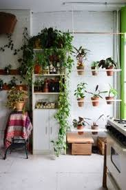 Plants In Bathroom Images by Oh My So Many Plants In The Bathroom Love It For The Home