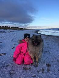 Dogs That Dont Shed Keeshond by What Dogs Are Highly Tolerant Good With Children And Don U0027t Shed