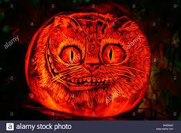 Roger Williams Pumpkin by Cat U0027s Face On A Jack O U0027 Lantern Roger Williams Park Zoo