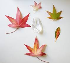 Fall Craft Ideas Leaf Drawing