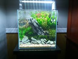 2012-11-11-12-11-06-jpg.4432 (2592×1944) | IDE AQUASCAPE ... King5com Fding Zen Through Aquascapes The Worlds Newest Photos By Pacific Aquascape Flickr Hive Mind Pacific Aquascape 28 Images Westin Photo Courtesy Of Christian Another Beautiful Pool Aquascapes For Luxury Living In Swimming Pool Contractors In Oahu Hi Aquascapes Ada Aquascaping Contest Homedesignpicturewin Submerged Jungle Fekete Tamas Awards Jungle 241 Best Aquatic Garden On Pinterest Aquascaping 111 Amazing Aquariums And The666 Extreme18