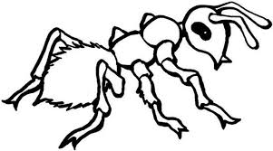 Ant Coloring Pages Kids