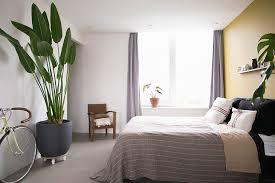 zimmerpflanzen für ein besseres raumklima re
