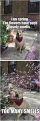 Dogs That Dont Shed And Smell by 1841 Best Cute Images On Pinterest Animals Corgis And Adorable